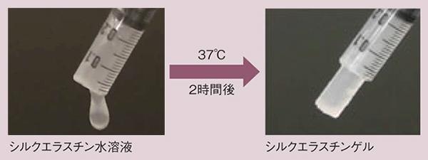 写真1.シルクエラスチン水溶液のゲル化