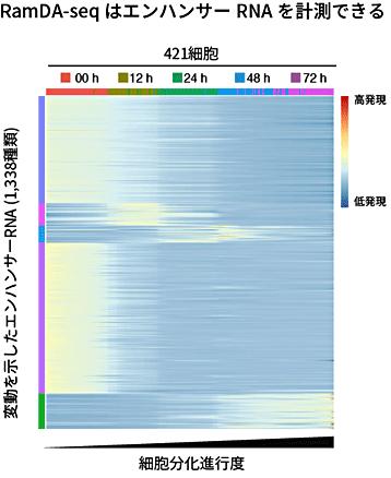 図6 細胞分化の進行に伴って変動するエンハンサーRNAの検出