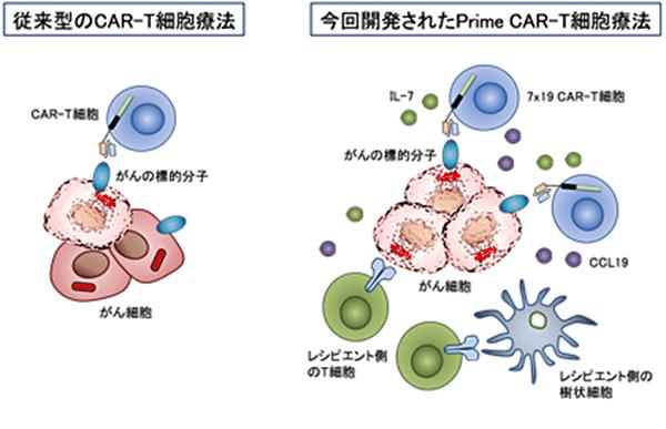 図3.7x19 CAR-T細胞が固形がんに対して治療効果を発揮するメカニズム