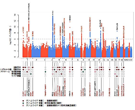 図1 52万人規模のゲノムワイド関連解析(GWAS)の結果