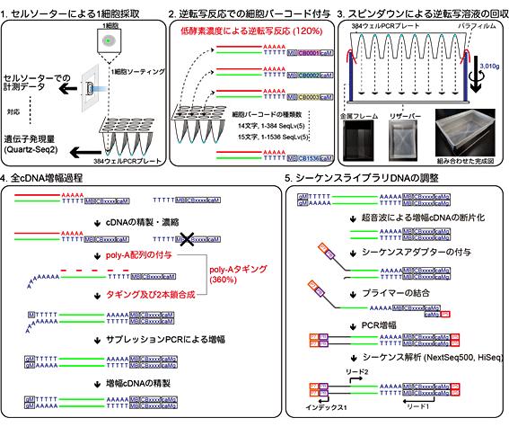 図2 Quartz-Seq2の概要