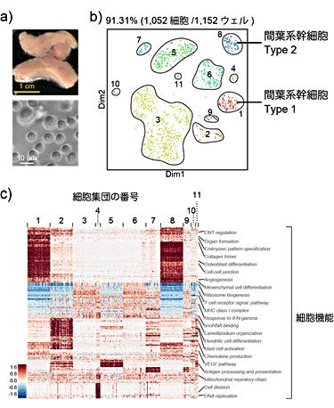 図7 複数の細胞からなる臓器由来細胞を用いたQuartz-Seq2の解析例