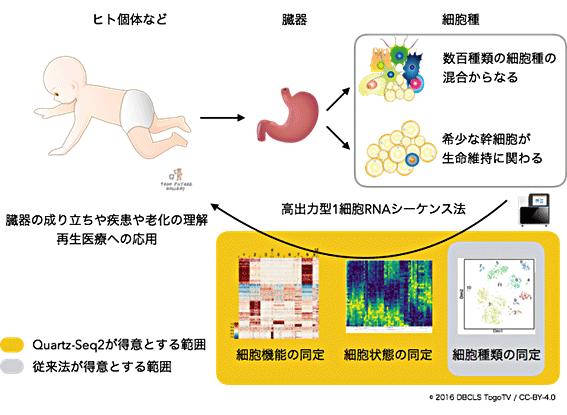 図1 臓器の成り立ちや疾患の理解に貢献する高出力型1細胞RNA-seq法の概念図