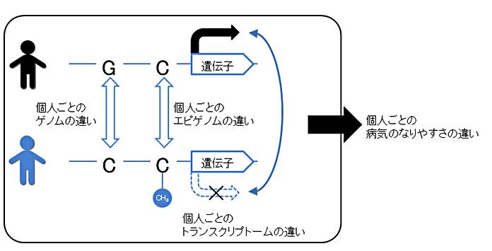 図1:個人ごとのゲノム、エピゲノム、トランスクリプトームの違い