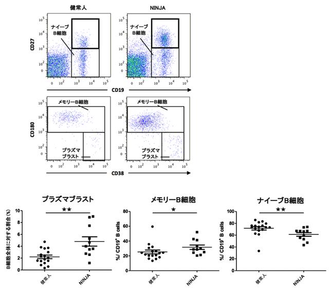 図2:B細胞亜分画の頻度