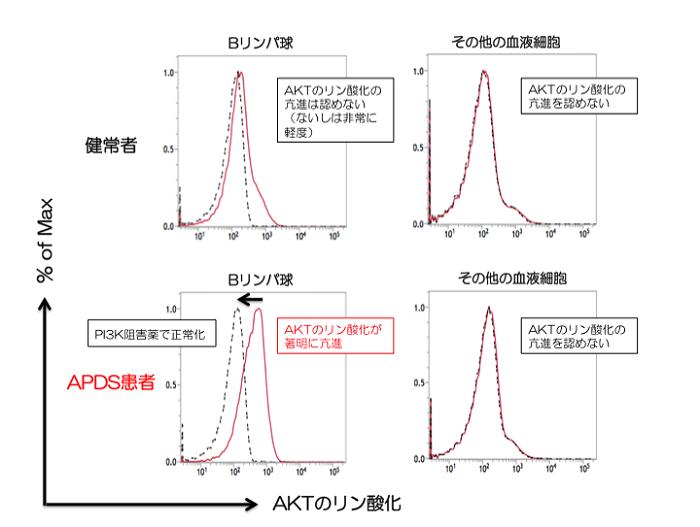 図1:Bリンパ球における細胞内AKTのリン酸化解析