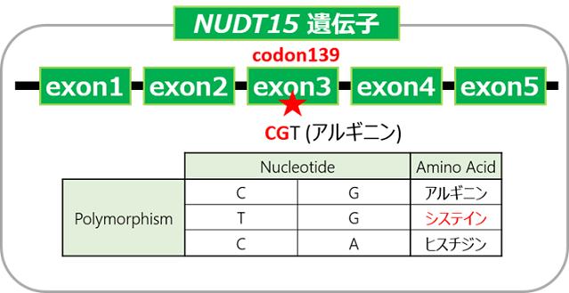 図1 本キットの検出対象NUDT15遺伝子多型とアミノ酸の種類