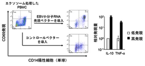 図3 小分子RNAを多く内包するエクソソームは、単球におけるCD69、IL10、TNF-αの発現を促進した。