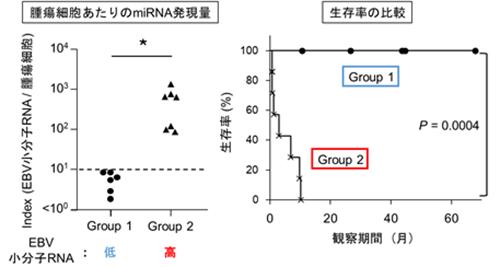 図4 びまん性大細胞型B細胞リンパ腫患者群は、腫瘍細胞あたりの小分子RNA発現量に依存して二分された