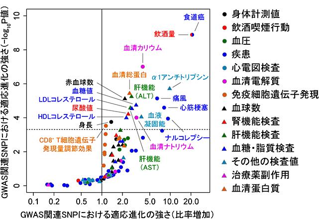 図4.日本人集団で病気や臨床検査値に影響を与える遺伝的変異における適応進化の強さ