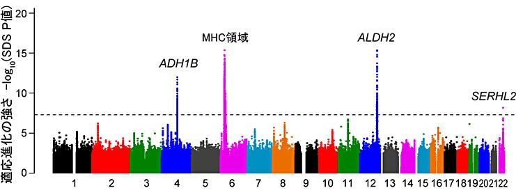 図.1日本人集団の適応進化に関わる遺伝子領域