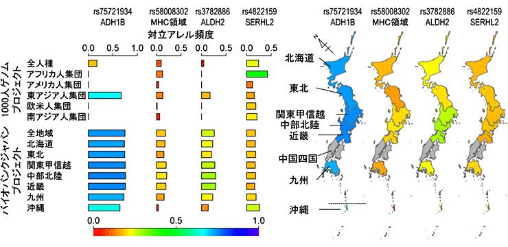 図2.日本人集団の適応進化に関わる遺伝的変異の各地域における頻度分布