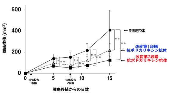 図2.抗ポドカリキシン抗体に、タンパク質部分の改変(第1段階)を加えると腫瘍体積が減少し、さらに糖鎖部分の改変(第2段階)を加えると腫瘍体積がさらに減少した。