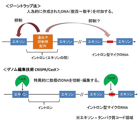 図1 ジーントラップ法とCRISPR/Cas9法の違い