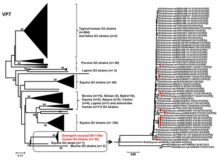 図1. インドネシアで流行したEquine-like G3 ロタウイルス株