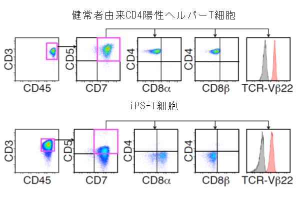 図1 CD4陽性ヘルパーT細胞とiPS-T細胞の遺伝子発現の比較