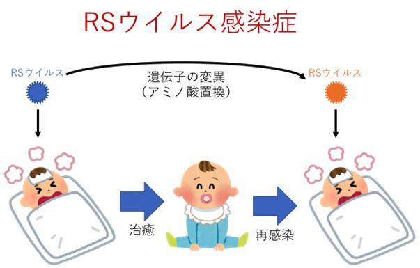 プレスリリースRSウイルスの再感染で抗原部位にアミノ酸置換を発見―研究開発中の製剤の抗ウイルス効果に影響を及ぼす可能性―