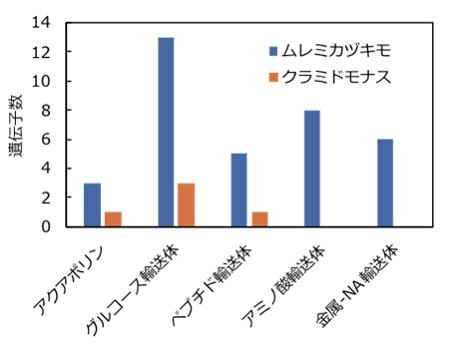 図1.輸送体遺伝子数の比較