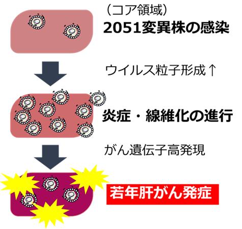 図1  B型慢性肝炎ゲノタイプFの肝がんメカニズム