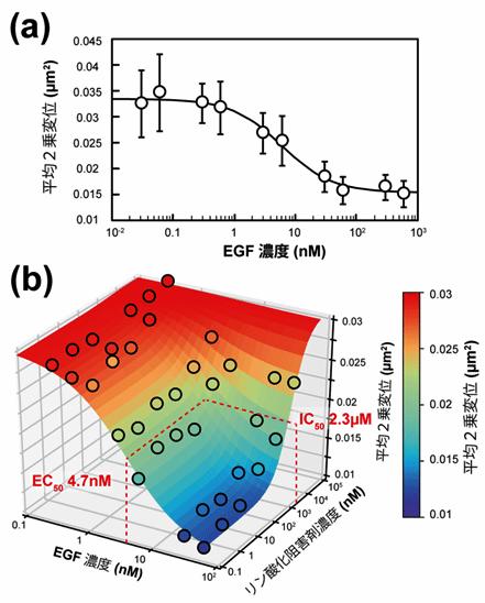 図3 上皮成長因子(EGF)とリン酸化阻害剤(AG1478)の拮抗作用マッピング