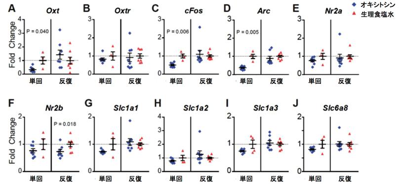 図3. オキシトシン単回投与と反復投与によるマウス脳内側前頭皮質における遺伝子発現の変化