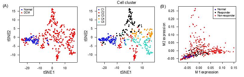 図2.シングルセル解析による心不全患者の分子病態解析