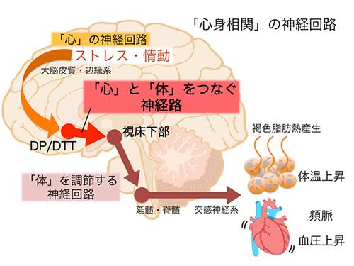 発熱 ストレス 性 なぜ?大人の熱が一晩で下がる原因。発熱を繰り返すときは要注意