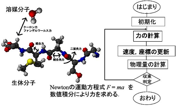 分子動力学シミュレーション概要図