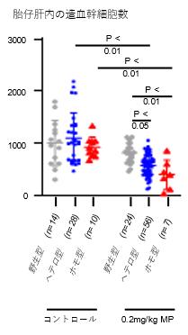 胎仔マウスの造血幹細胞が減少していることが理由の一つと判明